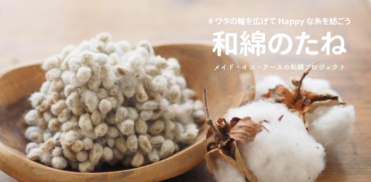 和綿のたね
